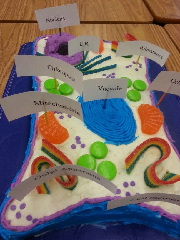 How Do You Make A Plant Cell Out Of Cake