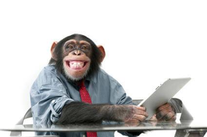 Monkey Working in Office