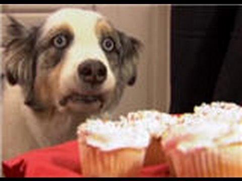 Stains Cupcake Dog