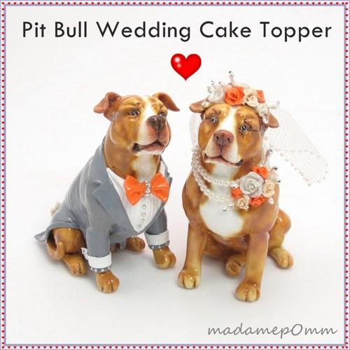 Pit Bull Terrier Dog