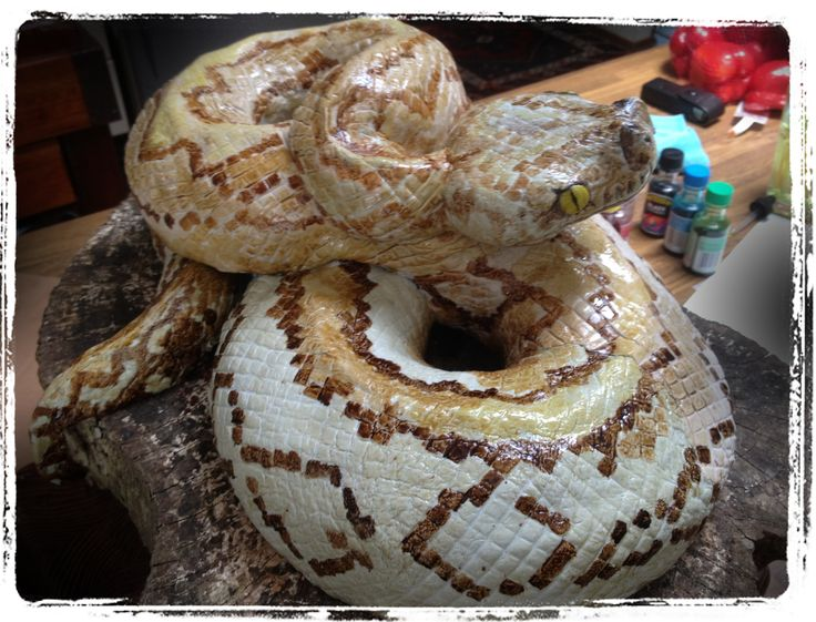 Realistic Looking Snake Cake