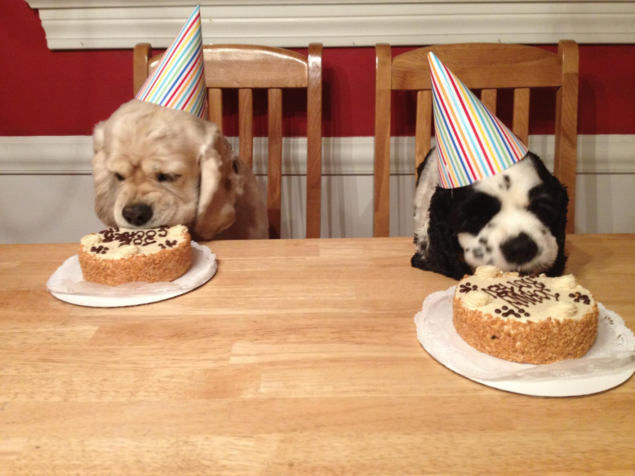 Three Dog Bakery Cake